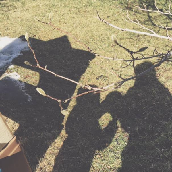 magnolia shadows.jpg
